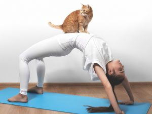 KitTea Cafe, SF, to host yoga and 'mewwie' nights with resident felines for company.