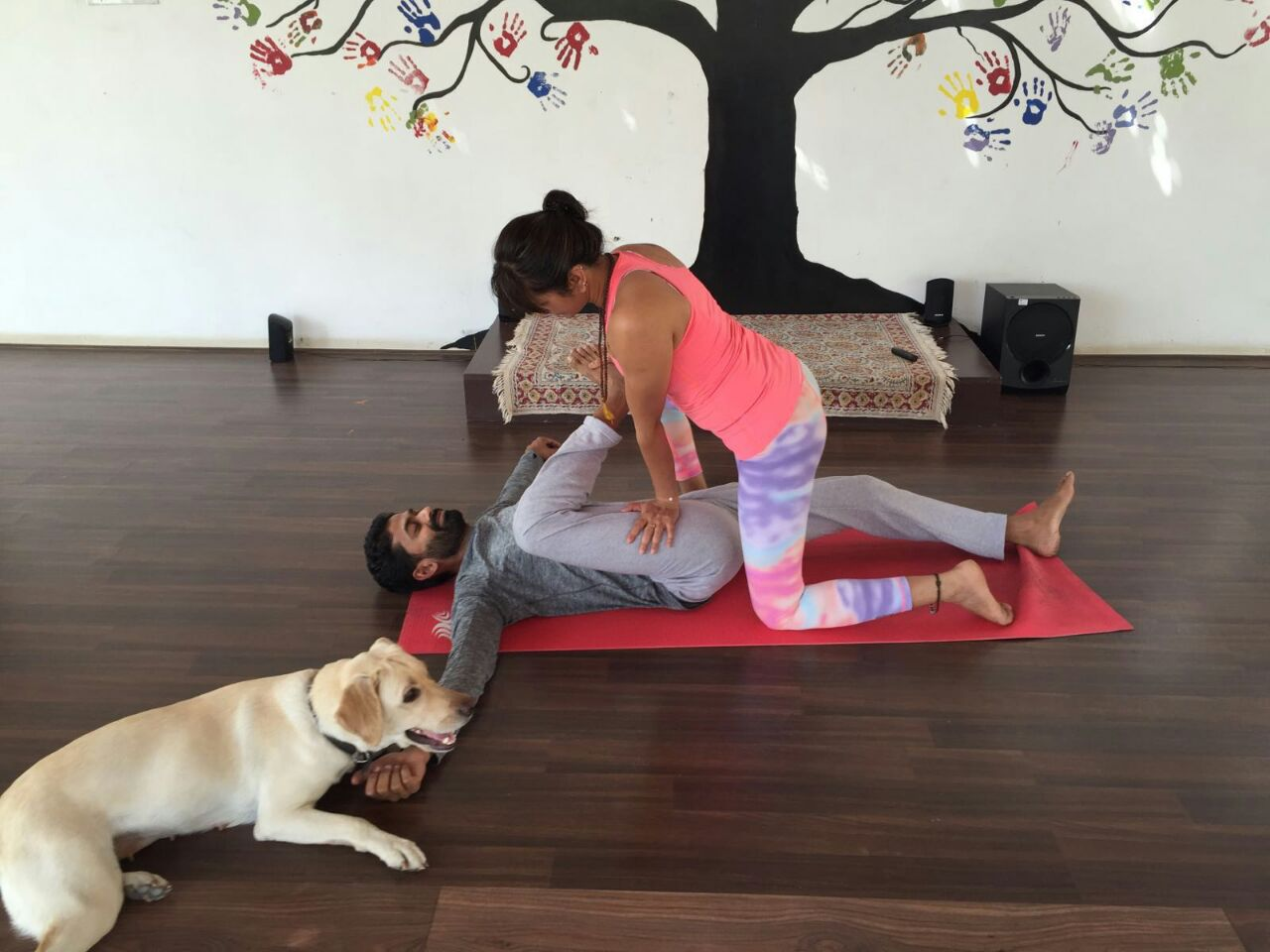 yoga, total yoga, manish pole. neetu singh, life with a pet, doga, yoga and animals, meditation and animals